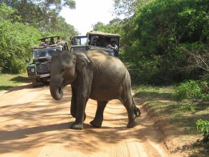 6   Yala-National-Park-Sri-Lanka-23